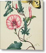 Convolvulus With Yellow Butterfly Metal Print by English School