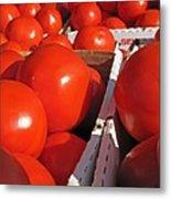 Cool Tomatoes Metal Print by Barbara McDevitt