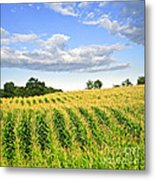 Corn Field Metal Print by Elena Elisseeva
