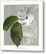Cornus 'eddie's White Wonder' Metal Print by Saxon Holt