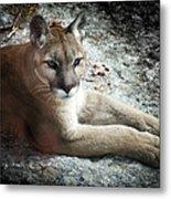 Cougar Country Metal Print by Karen Wiles
