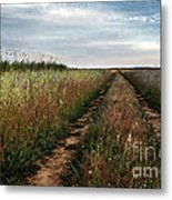 Countryside Tracks Metal Print by Carlos Caetano