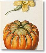 Courgette And A Pumpkin Metal Print by Joseph Jacob Plenck