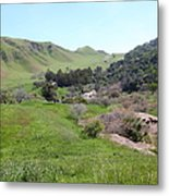Cows Along The Rolling Hills Landscape Of The Black Diamond Mines In Antioch California 5d22294 Metal Print by Wingsdomain Art and Photography
