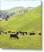 Cows Along The Rolling Hills Landscape Of The Black Diamond Mines In Antioch California 5d22328 Metal Print by Wingsdomain Art and Photography
