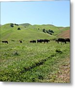 Cows Along The Rolling Hills Landscape Of The Black Diamond Mines In Antioch California 5d22346 Metal Print by Wingsdomain Art and Photography