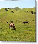 Cows Along The Rolling Hills Landscape Of The Black Diamond Mines In Antioch California 5d22350 Metal Print by Wingsdomain Art and Photography