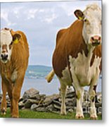 Cows Metal Print by Terry Whittaker