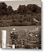Crabbers Metal Print by Skip Willits