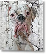 Cracking Up Metal Print by Judy Wood