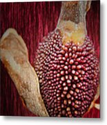 Crimson Canna Lily Bud Metal Print by Bill Tiepelman
