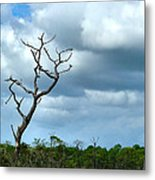 Crooked Tree On Crooked Island Metal Print by Julie Dant
