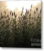 Crops In Fog Metal Print by Olivier Le Queinec