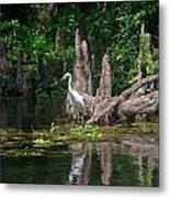 Crystal River Egret Metal Print by Skip Willits