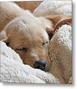 Cuddling Labrador Retriever Puppy Metal Print by Jennie Marie Schell