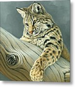 Curiosity - Young Bobcat Metal Print by Paul Krapf