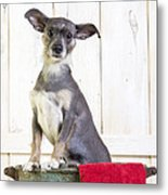 Cute Dog Washtub Metal Print by Edward Fielding