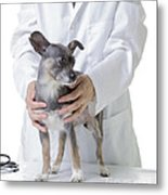 Cute Little Dog At The Vet Metal Print by Edward Fielding
