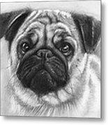 Cute Pug Metal Print by Olga Shvartsur