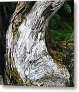 Cycle Of Life Metal Print by Bill Caldwell -        ABeautifulSky Photography