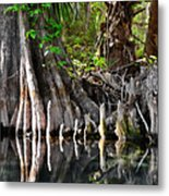 Cypress Trees - Nature's Relics Metal Print by Christine Till