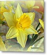 Daffodil Metal Print by Bishopston Fine Art