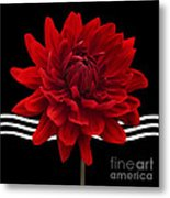Dahlia Flower And Wavy Lines Triptych Canvas 2 - Red Metal Print by Natalie Kinnear