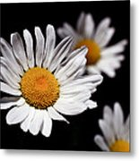 Daisies Metal Print by Rona Black