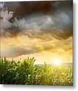 Dark Skies Looming Over Corn Fields  Metal Print by Sandra Cunningham