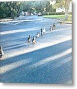 Davis Ducks Metal Print by Cadence Spalding