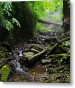 Deep In The Woods Metal Print by Bill Cannon