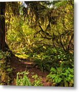 Deep Into The Hoh Rain Forest Metal Print by Rich Leighton