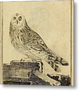 Die Stein Eule Or Church Owl Metal Print by Philip Ralley