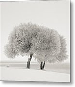 Different Season Metal Print by Ari Salmela