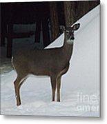 Doe A Deer Metal Print by Brenda Brown