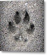 Dog Paw Print In Sand Metal Print by Elena Elisseeva