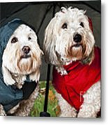 Dogs Under Umbrella Metal Print by Elena Elisseeva
