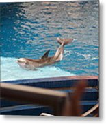 Dolphin Show - National Aquarium In Baltimore Md - 1212104 Metal Print by DC Photographer