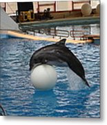 Dolphin Show - National Aquarium In Baltimore Md - 1212160 Metal Print by DC Photographer