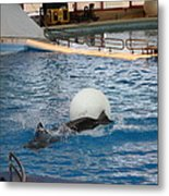 Dolphin Show - National Aquarium In Baltimore Md - 1212164 Metal Print by DC Photographer
