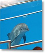 Dolphin Show - National Aquarium In Baltimore Md - 1212193 Metal Print by DC Photographer