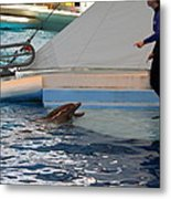 Dolphin Show - National Aquarium In Baltimore Md - 1212195 Metal Print by DC Photographer