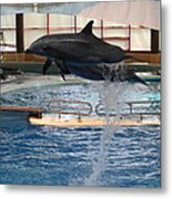 Dolphin Show - National Aquarium In Baltimore Md - 1212249 Metal Print by DC Photographer