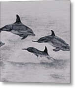 Dolphins Metal Print by Lucy D