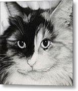Domestic Cat Metal Print by Natasha Denger