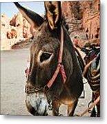 Donkey Metal Print by Jelena Jovanovic