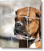 Don't Fence Me In Metal Print by Terry Fleckney