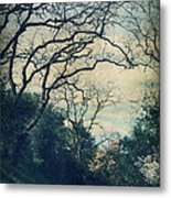 Down That Path Metal Print by Laurie Search