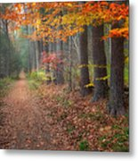 Down The Trail Metal Print by Bill Wakeley