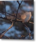 Downy Feather Backlit On Wintry Branch At Twilight Metal Print by Anna Lisa Yoder